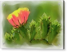 Acrylic Print featuring the painting Cactus Flower On A Cactus Plant Ap by Dan Carmichael
