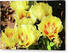 Acrylic Print featuring the photograph Cactus Flowers And Friend by Sheila Brown