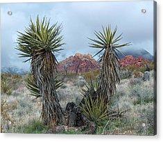 Cactus Frame Acrylic Print