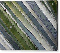 Cactus Highway - Euphorbia Canariensis Acrylic Print