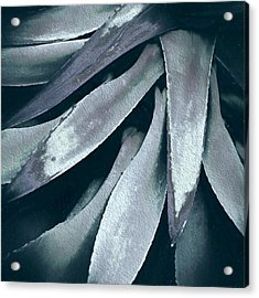 Acrylic Print featuring the photograph Cactus In Blue And Grey by Julie Palencia