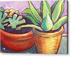 Cactus In Planters Acrylic Print
