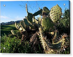 Cactus In The Mountains Acrylic Print