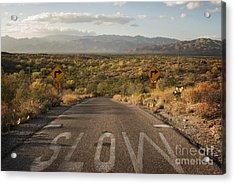 Cactus Landscape Acrylic Print