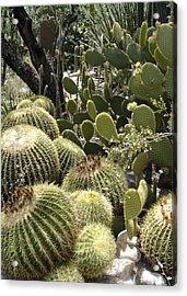 Cactus Life In Arizona Acrylic Print