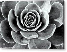 Cactus Ll Acrylic Print