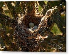 Cactus Nest Acrylic Print by David Lee Thompson