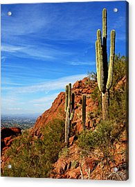 Cactus On Camelback 14x17 Acrylic Print by Daniel Woodrum