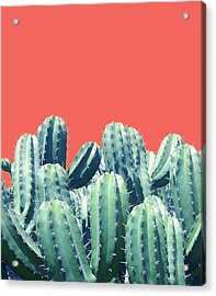 Cactus On Coral Acrylic Print