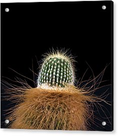 Acrylic Print featuring the photograph Cactus Photo by Catherine Lau