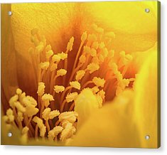 Acrylic Print featuring the photograph Cactus Pollen by Len Romanick