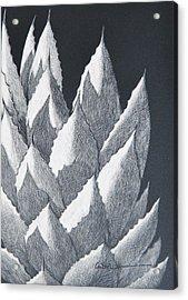 Cactus Reflections Acrylic Print