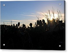 Acrylic Print featuring the photograph Cactus Silhouettes by Matt Harang