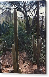 Cactus With Mountain Acrylic Print by Eliot LeBow