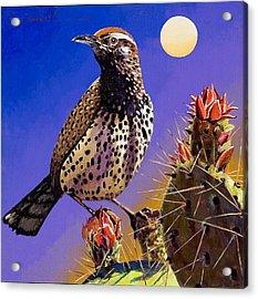 Cactus Wren Acrylic Print by Bob Coonts