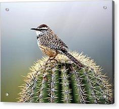 Cactus Wren On Saguaro Acrylic Print
