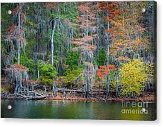Caddo Lake Fall Foliage Acrylic Print by Inge Johnsson