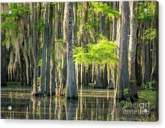 Caddo Swamp 1 Acrylic Print