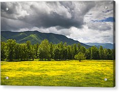 Cades Cove Great Smoky Mountains National Park Tn - Fields Of Gold Acrylic Print by Dave Allen