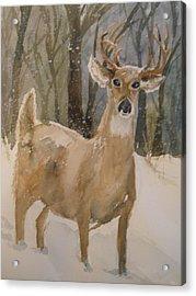 Caedmon's Buck Acrylic Print by Sandra Strohschein