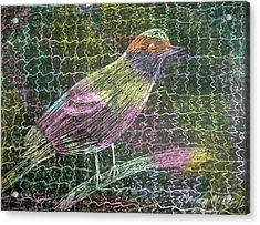 Caged Bird Acrylic Print by Marita McVeigh