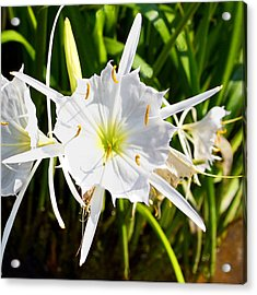 Cahaba Lily Acrylic Print by Fred Baird