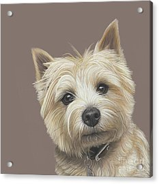 Acrylic Print featuring the painting Cairn Terrier - Dave by Donna Mulley