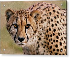 Calculated Look Acrylic Print