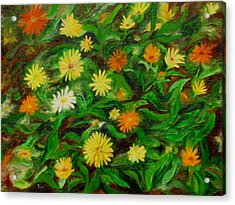Calendula Acrylic Print