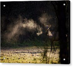 Acrylic Print featuring the photograph Calf Elk In December by Michael Dougherty