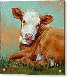 Calf Resting Acrylic Print