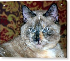 Acrylic Print featuring the photograph Cali-mese by Betty Northcutt