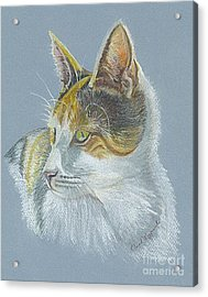 Acrylic Print featuring the drawing Calico Callie by Carol Wisniewski