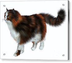 Calico Cat Acrylic Print by Corey Ford