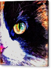 Calico Cat Acrylic Print by Kathy Kelly