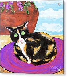 Calico Cat On A Rug  Acrylic Print