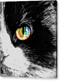 Calico Cat With A Splash Acrylic Print by Kathy Kelly