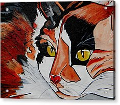 Calico Close Up Of Face Acrylic Print