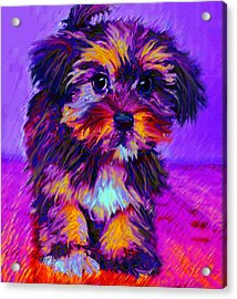 Calico Dog Acrylic Print