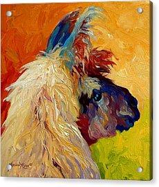 Calico Llama Acrylic Print