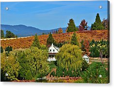 California Apple Hill Acrylic Print