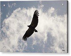 California Condor In Flight Acrylic Print
