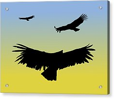 California Condors In Flight Silhouette At Sunrise Acrylic Print