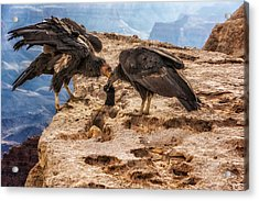 Acrylic Print featuring the photograph California Condors Inspecting A Sock by Claudia Abbott