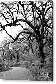 California Country Road Acrylic Print