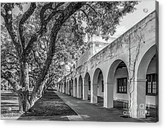 California Institute Of Technology Campus Trees Acrylic Print by University Icons