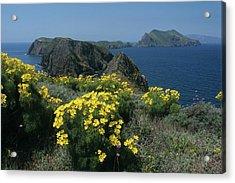 California Island Sunshine Acrylic Print