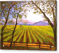 California Napa Valley Vineyard Acrylic Print by Connie Tom