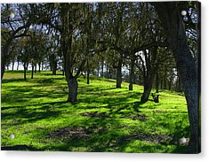 California Oak Woodland With Dappled Sunlight Acrylic Print