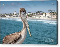 Acrylic Print featuring the photograph California Pelican by John Wadleigh